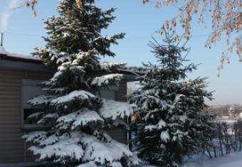 Аэродромная зимняя флора